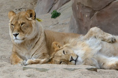 The Zoo of Antwerp