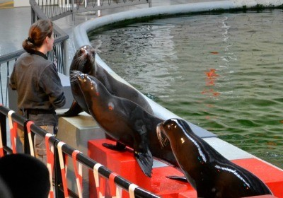 Antwerp Zoo sea lion show